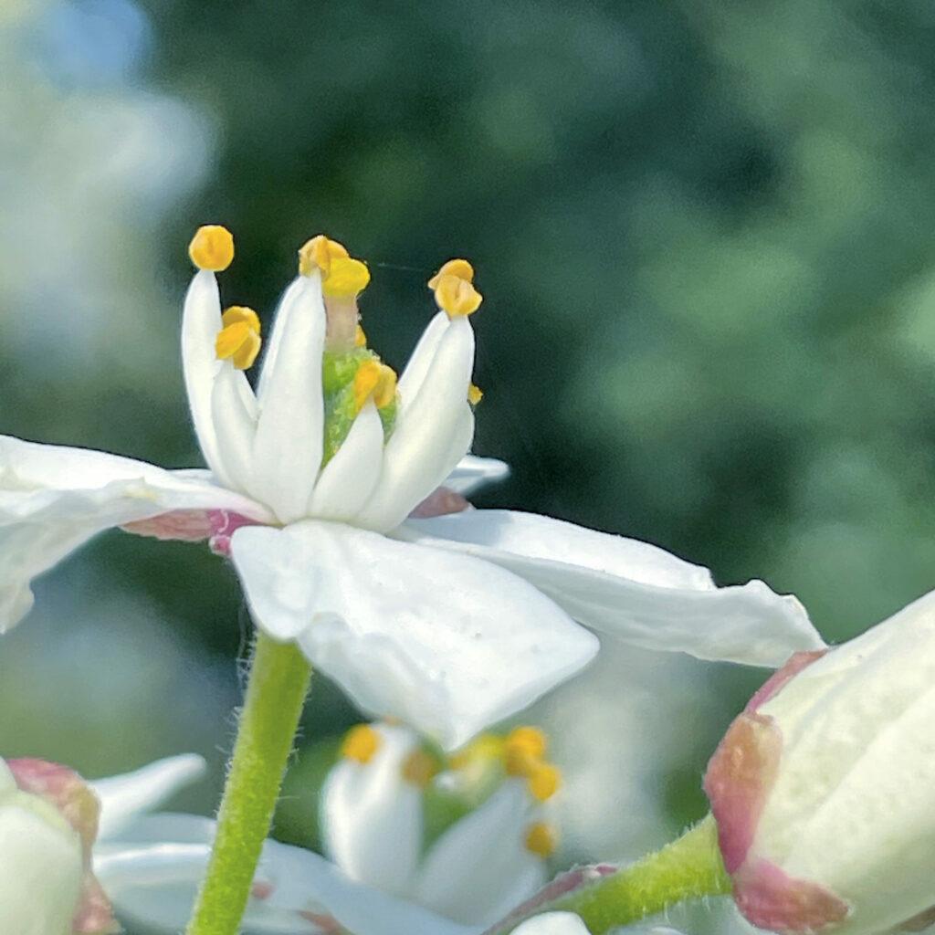 Flor en el parque Bordelés de Burdeos.